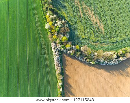 Green fields and trees aerial view in spring