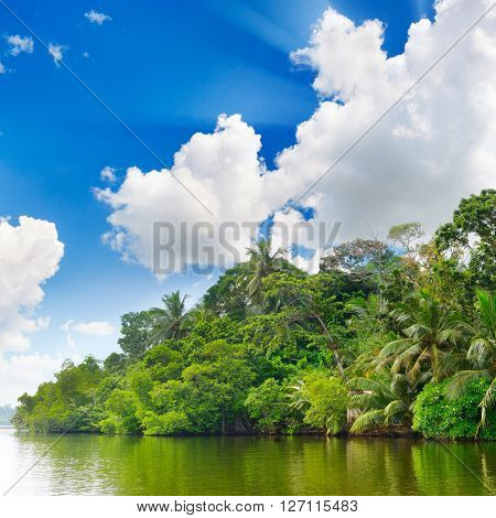 Lake in jungle and blue sky