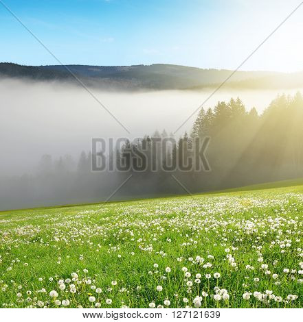 Morning haze in the National park Sumava, Czech Republic. Spring landscape.