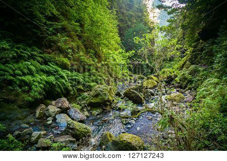 landscape with a small brook and green trees at the end of levada Caldeirao Verde Madeira Portugal