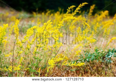 Nice view of alpine yellow flowers close up glowing by sunlight. Picturesque and gorgeous scene. Soft filter effect. Artistic picture. Beauty world.