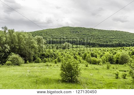 Wild untouched forests in the large space