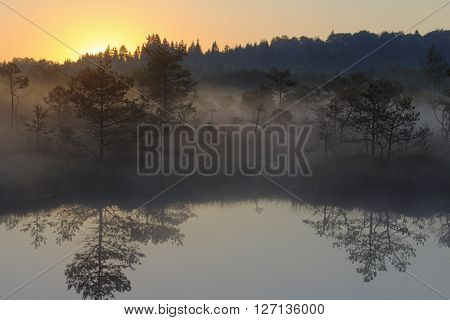 Sunrise in the misty bog during summer