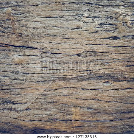 Dry Skin Wood Texture Of Aged Hardwood Background