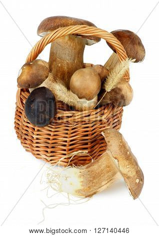 Heap of Fresh Raw Boletus Mushrooms with Dry Grass in Wicker Basket isolated on White background