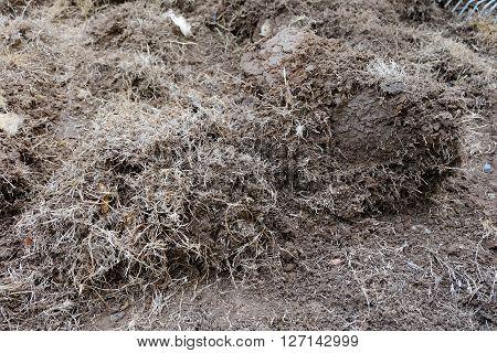 Yard Work, Preparation Soil In Garden With Dry Grass