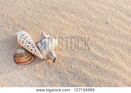 sea snails and shell over sand on beach