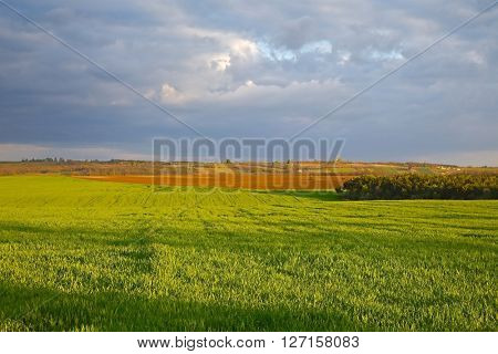 Agricultural field in late sunlight