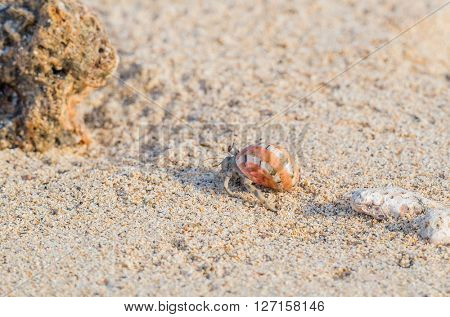 Hermit crab on beach in Egypt