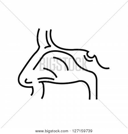 Human Nose, Medical Doctors Otolaryngology Icon, Line Icon Style