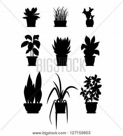 Set of house plant isolated. Vector flat house plant pot illustration. Collection of flat home plant pot. BLACK house plants in pot for your design. Home plants icons set