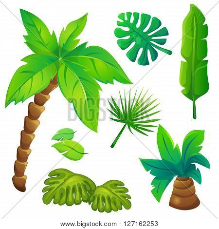 Vector illustration set of stylized jungle trees on white background