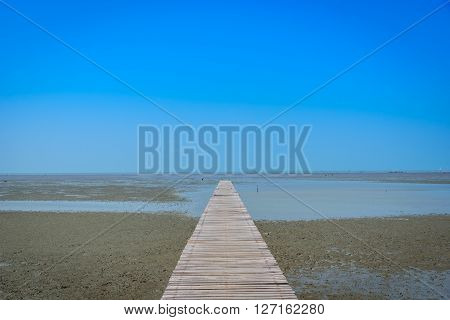 Wooden bridge in mangrove forest with blue sky background.