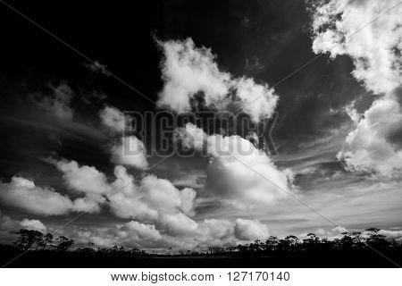 Beautiful sky with forest view in blackwhite shot.