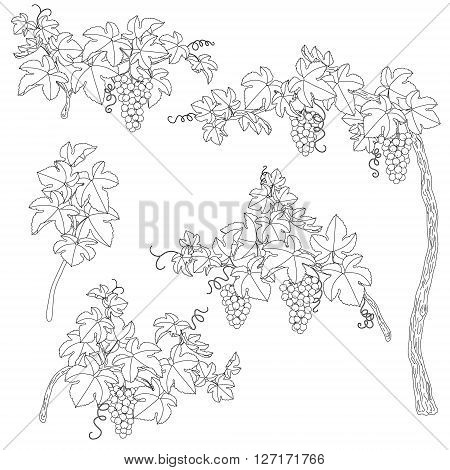 Hand drawn set of outlines branches with bunch of grapes and leaves. Black and white elements for coloring.