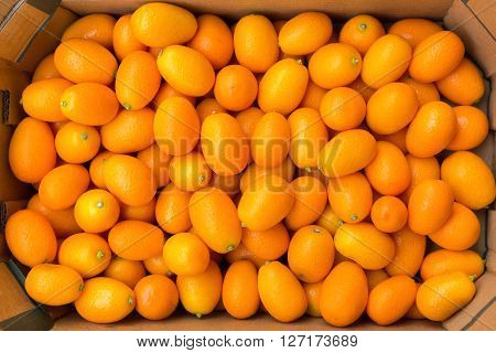 Heap of orange kumquats in cardboard box on market