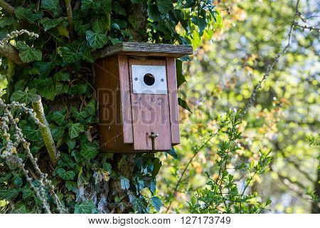 Detail view of a birdhouse in a Swiss forest