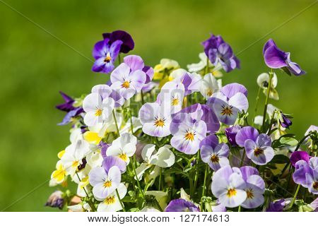 Purple And White Flowers In Spring