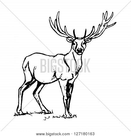 Graphic design of a deer with big antlers. The image is a herbivorous animal forest deer on a white background. Abstract illustration vector