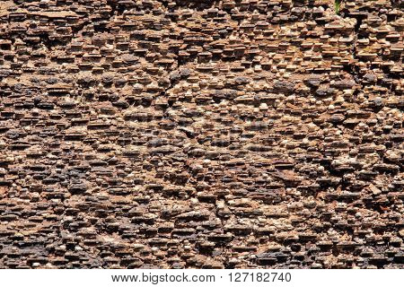 Natural background inside of the bark of a tree.