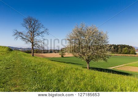 Fields Near Fislisbach, Switzerland