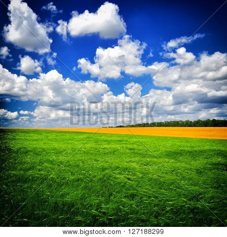 Beautiful Summer day on the green field against a dark blue sky. The image in the dark frame.