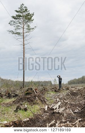 A lone man among the felled forest looking at one tree remaining. Deforestation. Environmental change. The problem of mankind. One tall tree