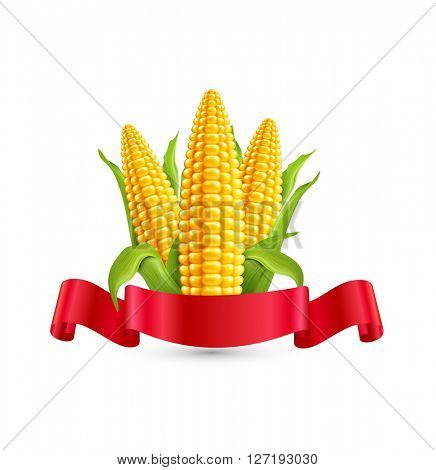 corn. Three ear of corn with leaves and red ribbon. Element for design