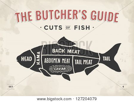 Cut of meat set. Poster Butcher diagram and scheme - Fish. Vintage typographic hand-drawn. Vector illustration