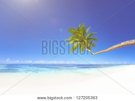 Coconut palm tree on beach.