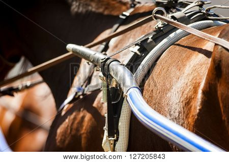 The detail of running horse harness closeup