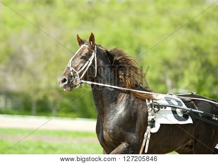 sport horse moving portrait on a sunny day