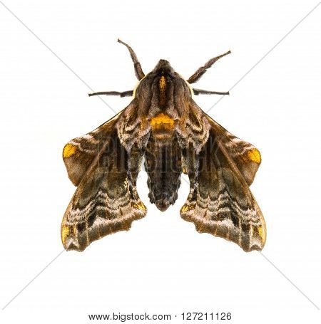 Small-eyed Sphinx (Paonias myops) isolated on a white background