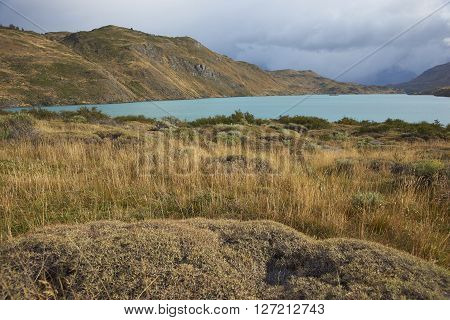 Low lying plants and grasses overlooking the blue waters of Rio Paine in Torres del Paine National Park, Patagonia, Chile