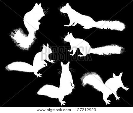 illustration with six squirrels isolated on black background