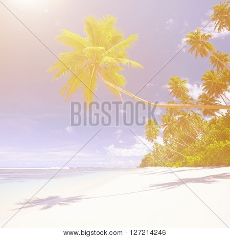 Tropical paradise with palm trees blues sea and white sand.