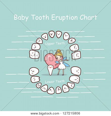 cartoon Baby tooth chart eruption record great for health dental care concept