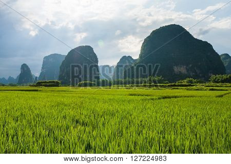 Landscape of karst mountains and rice fields in yangshuo china