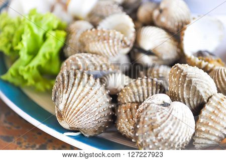 steamed ark shell dish on the table ** Note: Soft Focus at 100%, best at smaller sizes