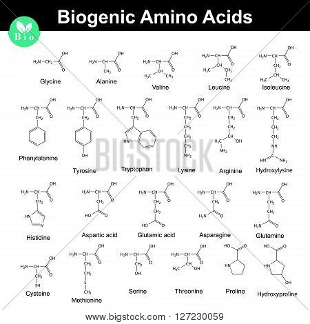 Biogenic amino acids structural molecular formulas 2d chemical vector on white background eps 8