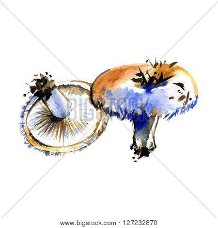 Watercolor summer insulated mushrooms Lactarius resimus on white background