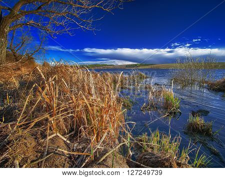 Lake shore and dry reed. Sky and clouds.Dry reed at foreground