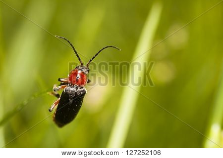 small beetle hanging on to a straw