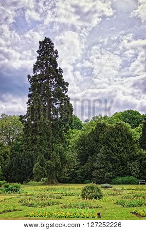 Big old fir trees and flowers in Park of Audley End House in Essex in England. It is a medieval county house. Now it is under protection of the English Heritage.