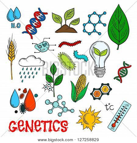 Genetic technologies in agriculture industry and science research experiments icon with colorful sketches of DNA and molecular models, corn vegetable, wheat ear and seedlings, plant cell structure, chemical formulas, pests and weather control, temperature