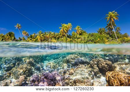 Tropical island above and bellow water