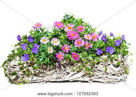 Pink Daisies In A White, Wooden Basket.