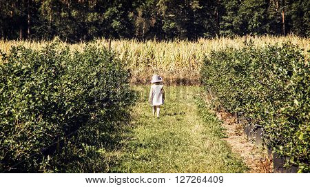 Little girl is going through the corridor in the orchard. Outdoor scene. Rural concept. Children's fashion. Bushes. Seasonal natural scene. Rear view.