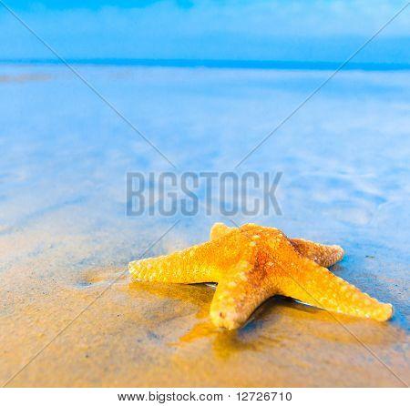 Sunny Star Shore