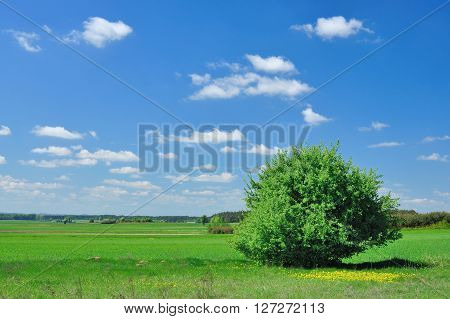 Summer landscape with tree meadow and blue sky